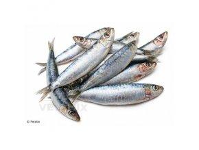 sardinky 0 5 kg